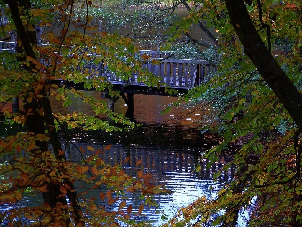 Rzeka, Most, Drzewa