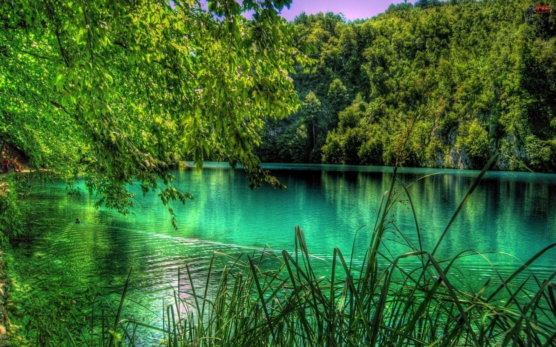 Trzcina, Jezioro, Las