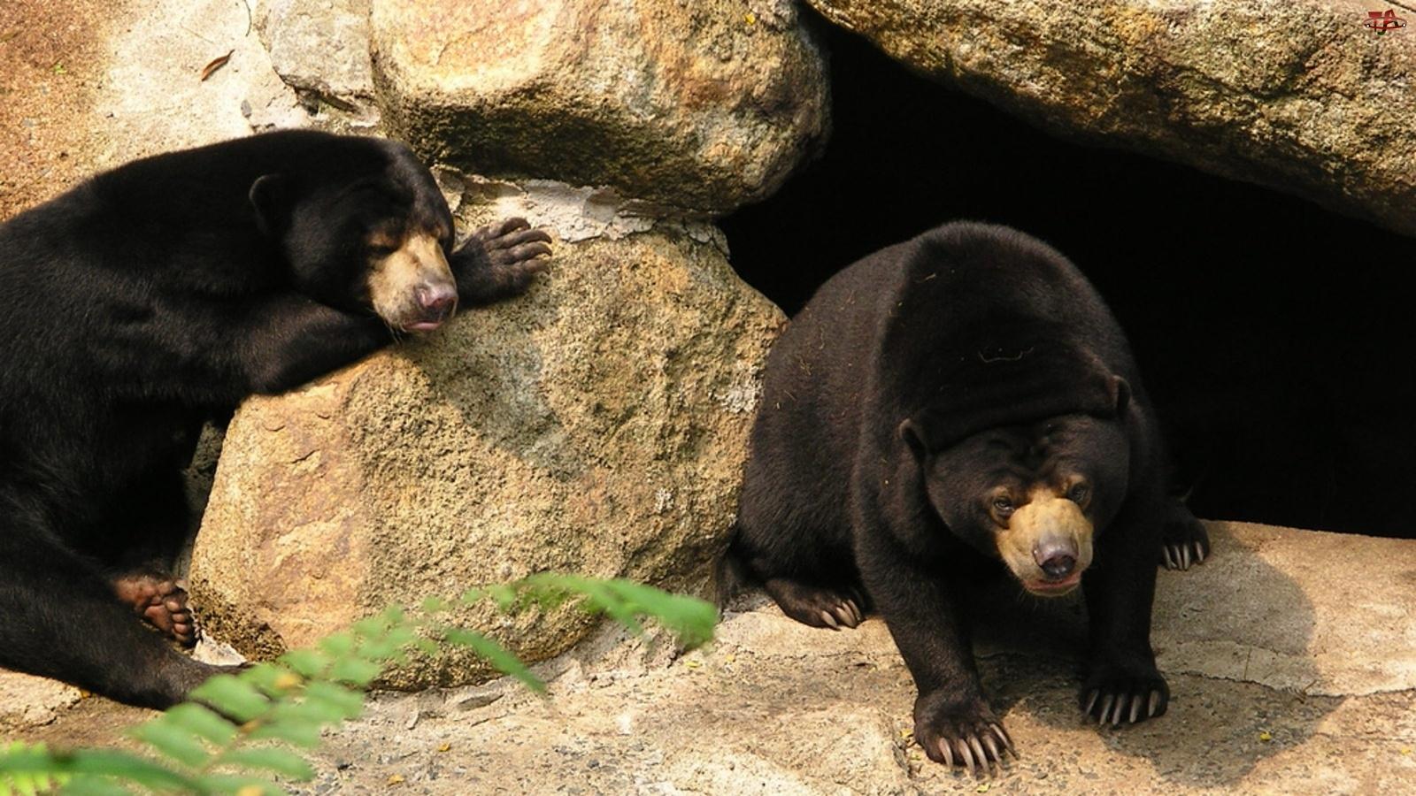 Kamienie, Niedźwiedzie, Dwa, Czarne