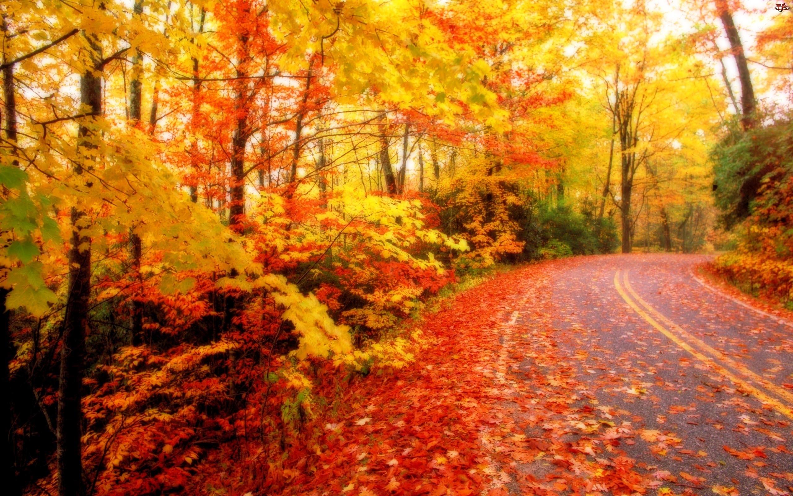 Liście, Jesień, Droga