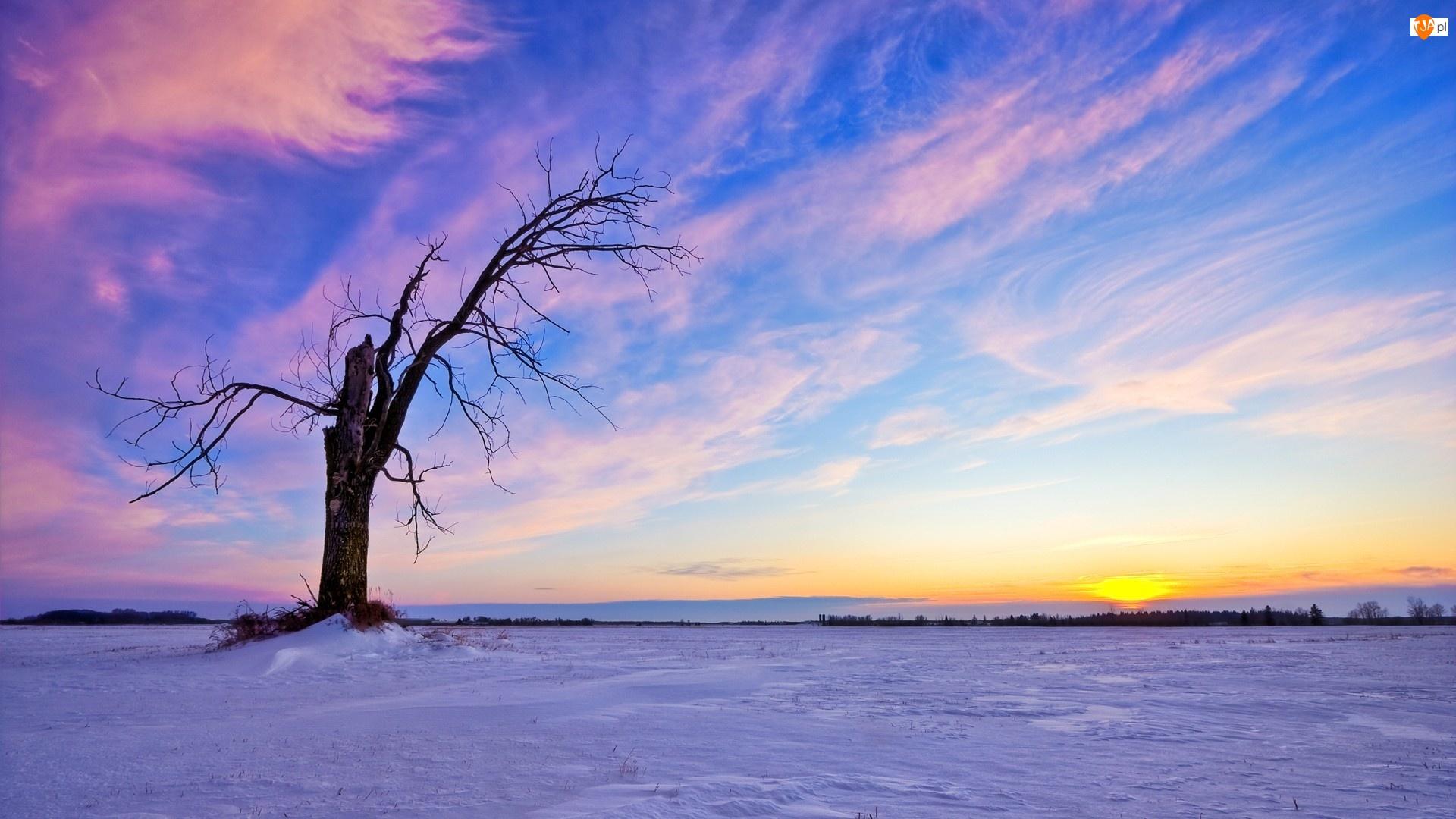Zima, Śnieg, Suche, Drzewo