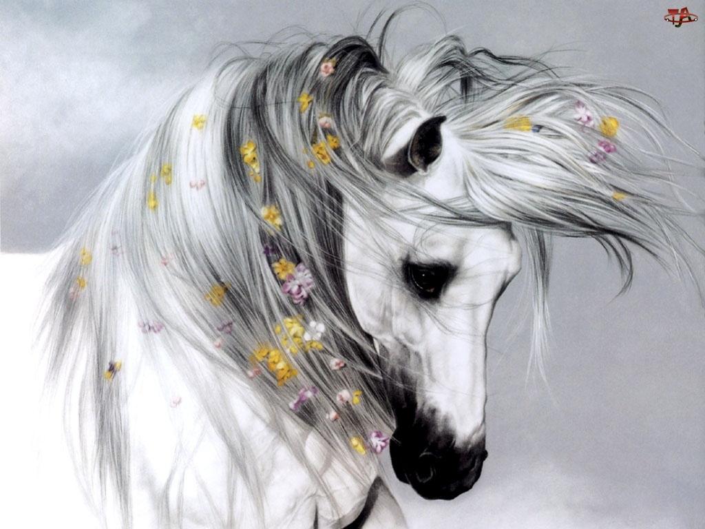 Kwiatki, Koń, Grzywa
