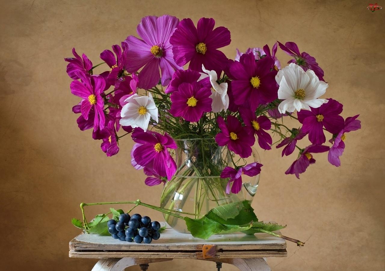 Fioletowe, Winogrona, Kosmea, Taboret, Białe, Kwiaty