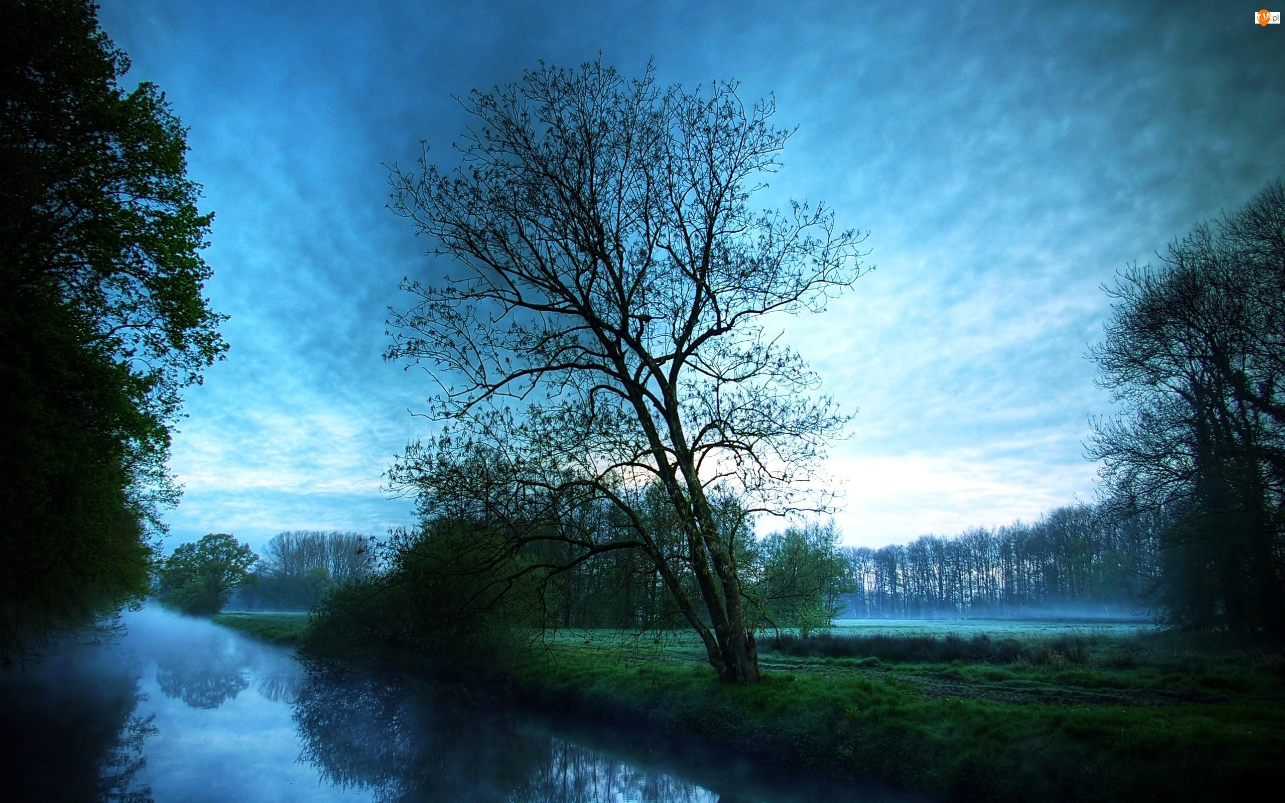 Drzewa, Mgła, Zmierzch, Woda