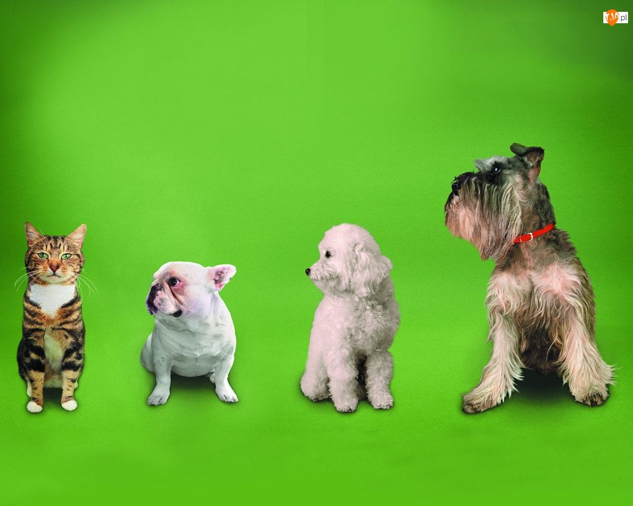 Psy, Przyjaciele, Kot