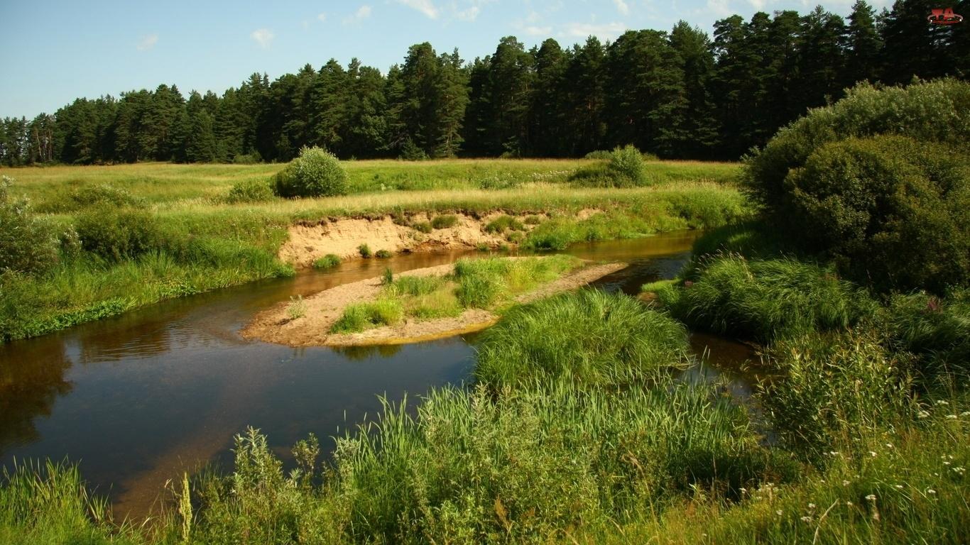Rzeka, Las, Łąka