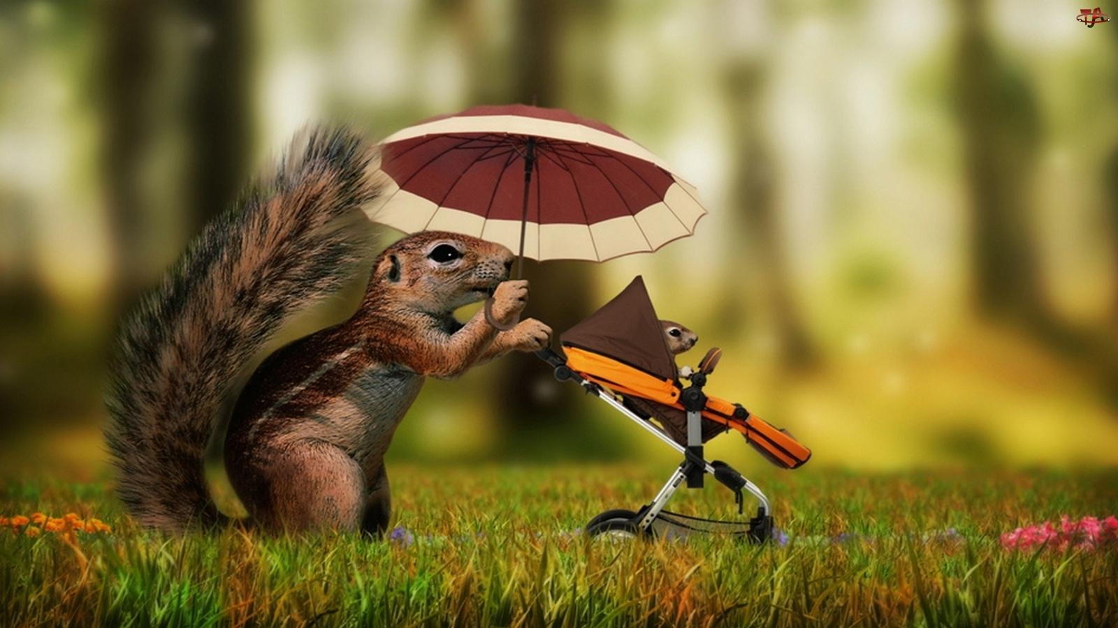 Wózek, Wiewiórka, Parasolka