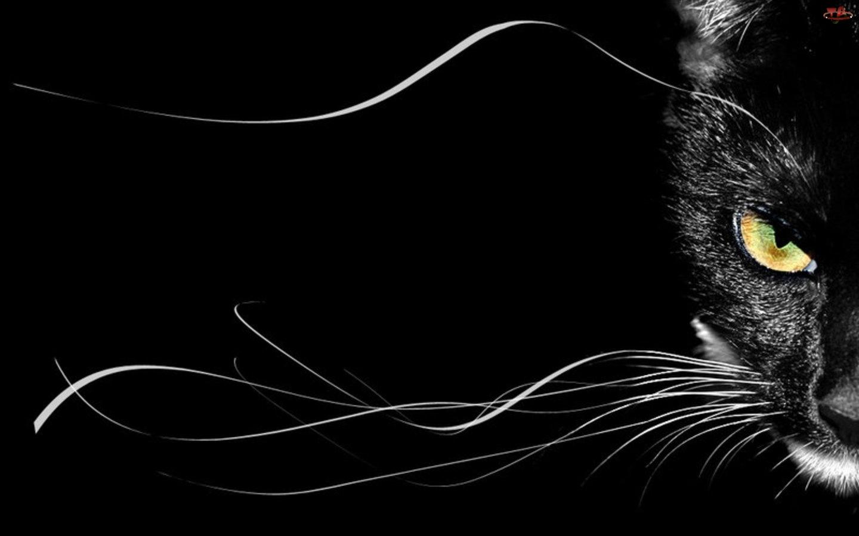 Wąsy Czarny Kot